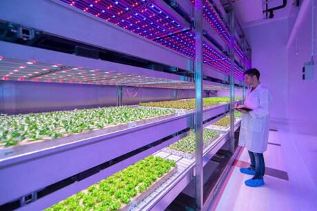 Cách trồng rau sạch bằng đèn Led