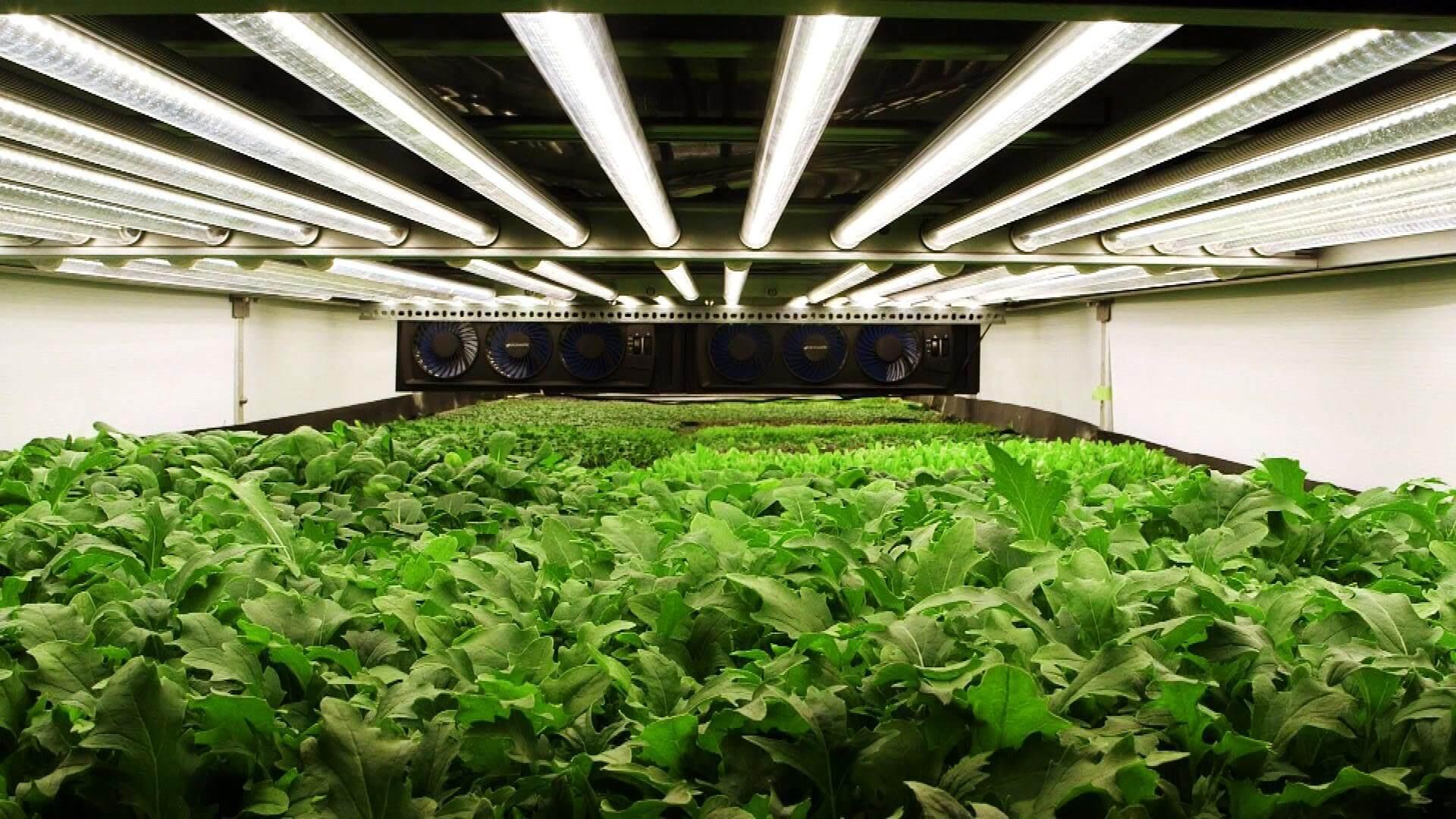 Trồng rau hoa quả bằng đèn Led quang hợp