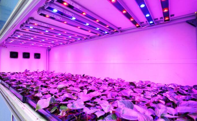 Các loại đèn quang hợp LED
